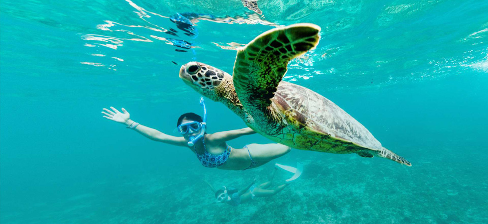 Go snorkeling at Gili Meno and swim with sea turtles