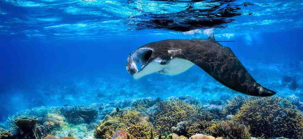 Swim with Manta Rays at Nusa Penida Bali
